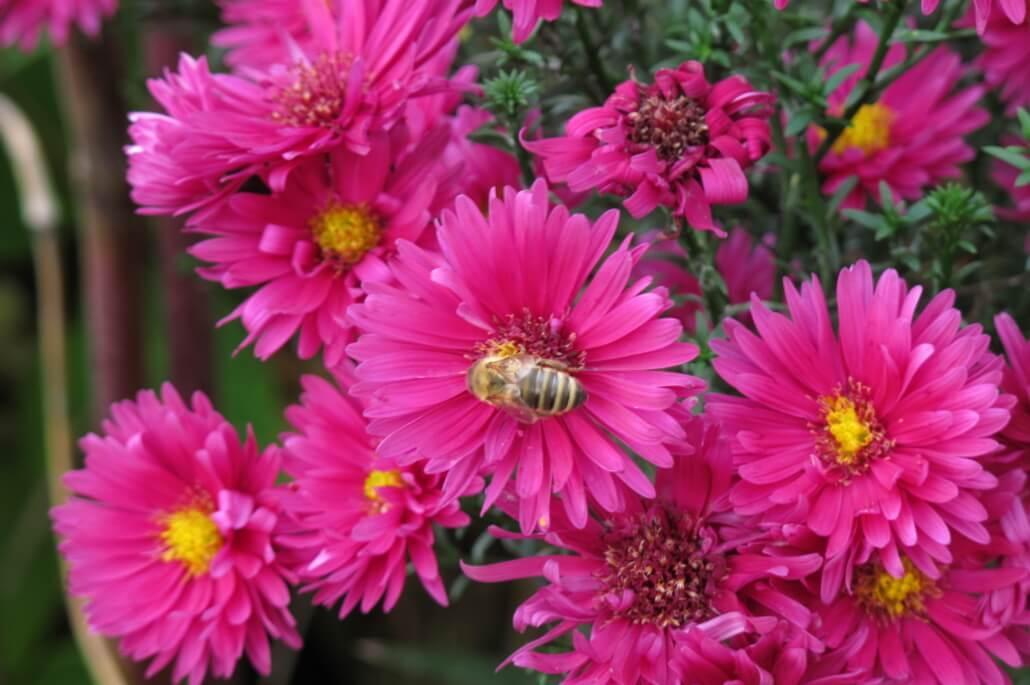 Natürlich Blumen Coburg